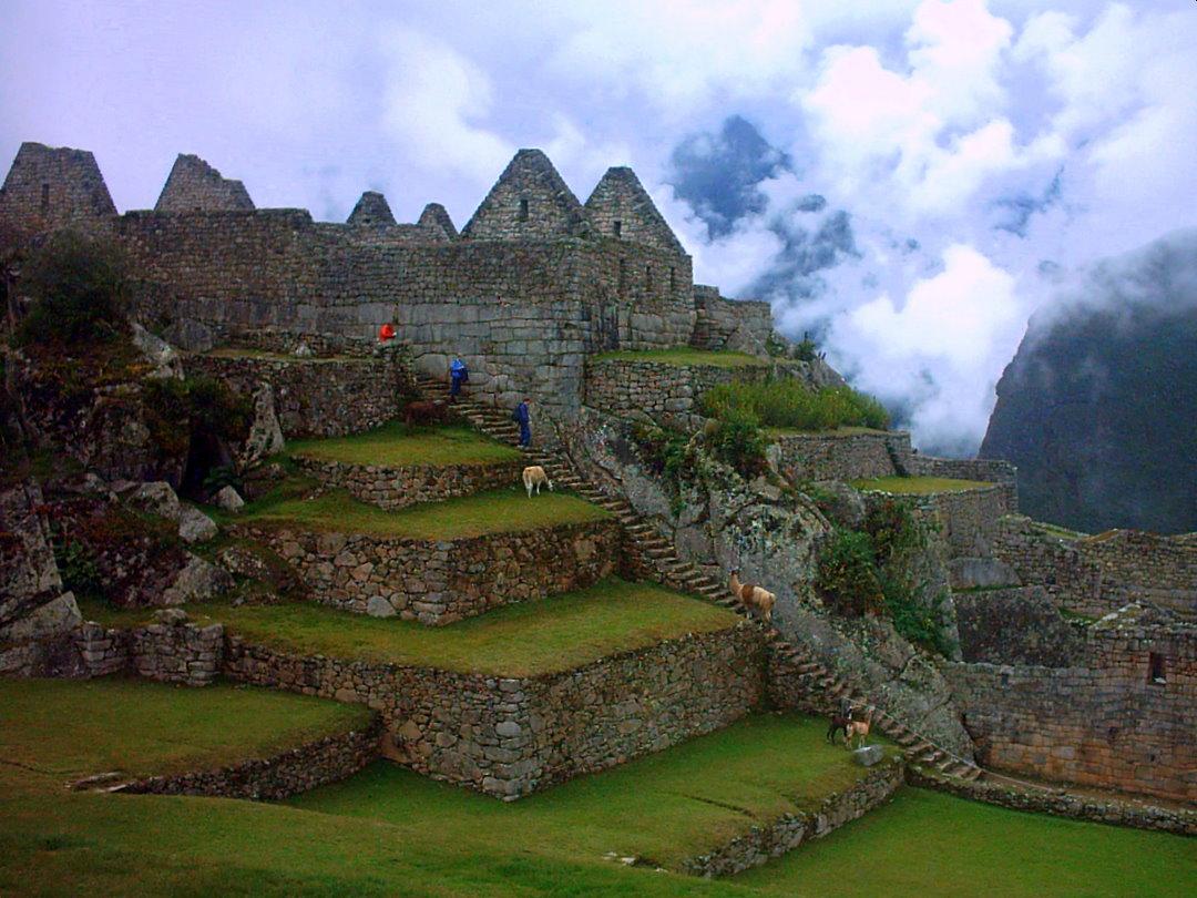 Llamas en Machu Picchu, Peru