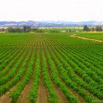 Sonoma y Napa Valley, viaje Costa Oeste, USA