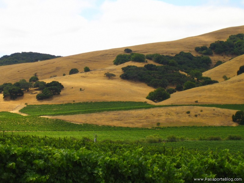 sonoma y napa valley