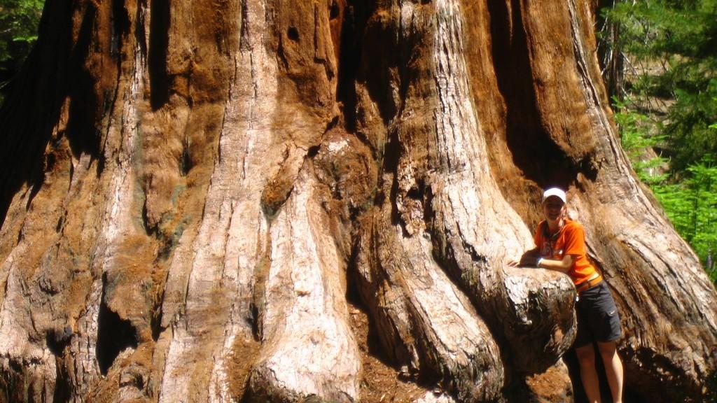 base de una secuoia gigante en yosemite viaje costa oeste estados unidos