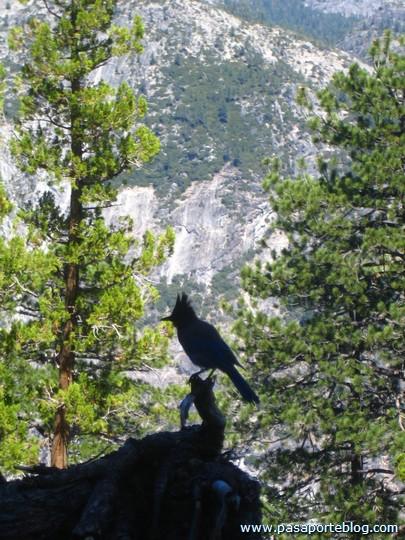 Contraluz Pajaro Yosemite