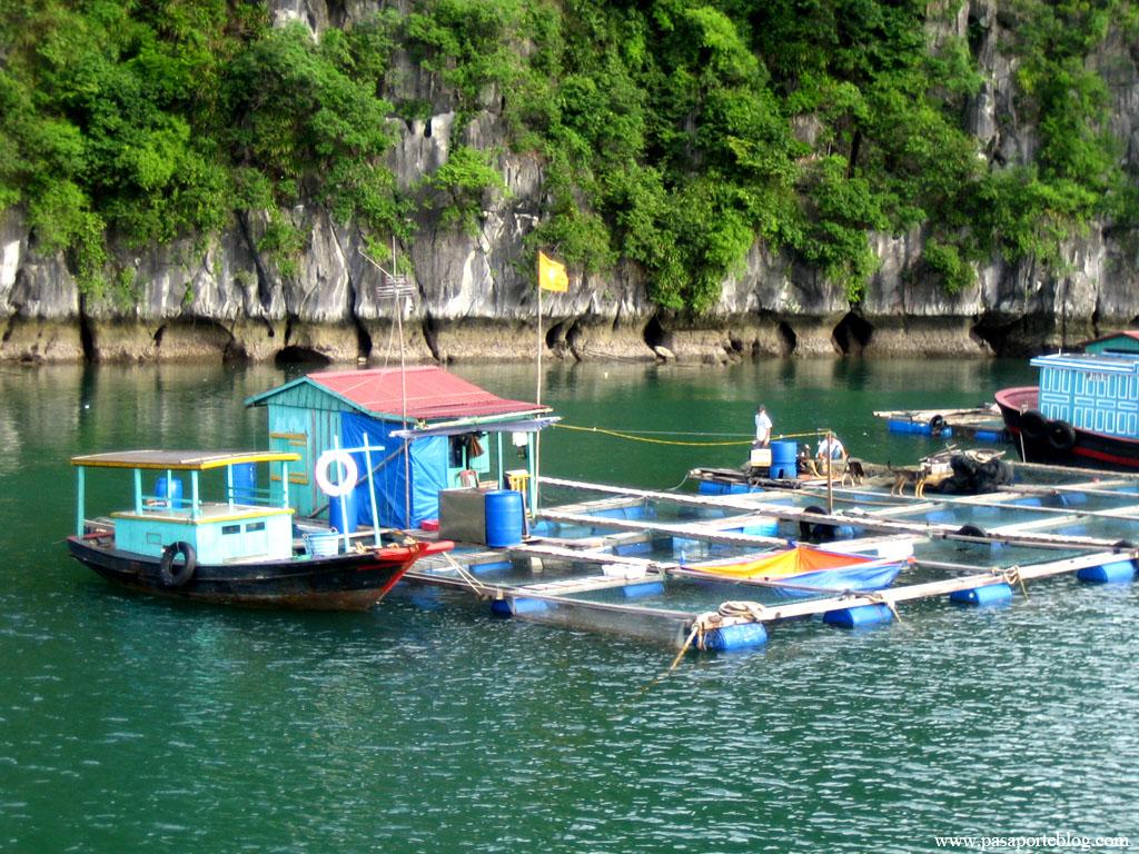 pescadores en la bahia de halong, vietnam