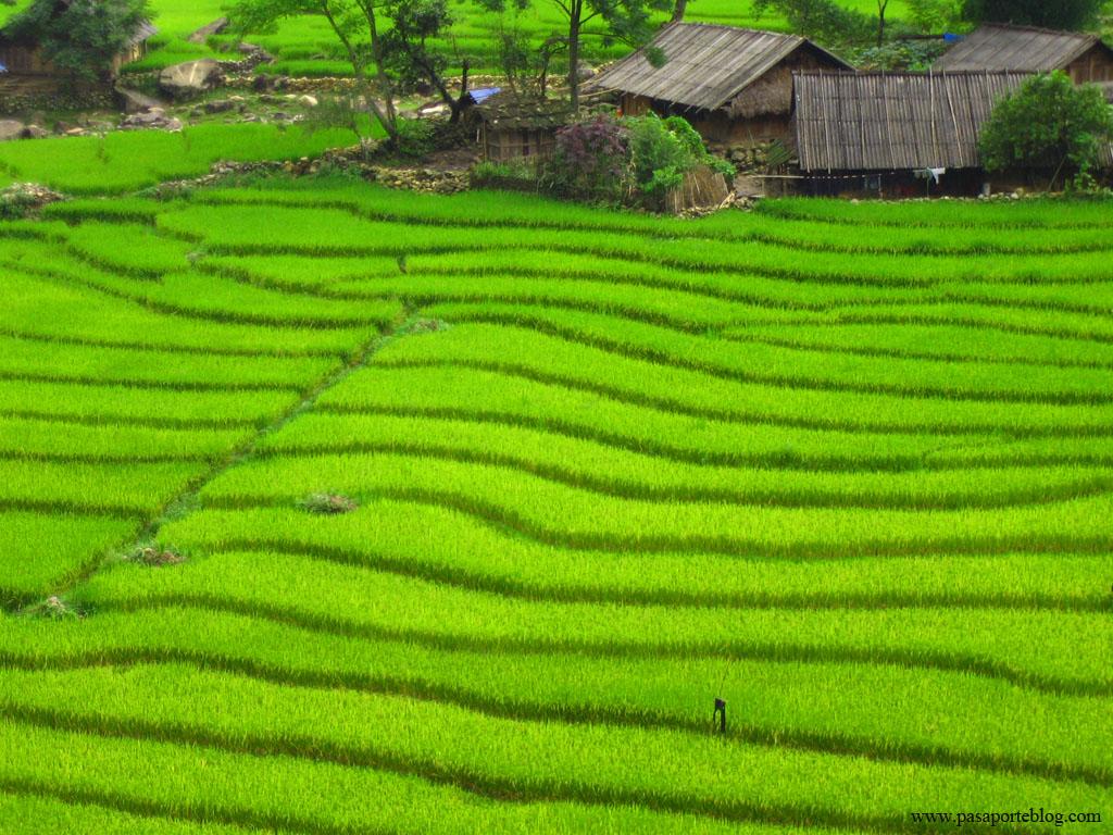 alde en el valle de Sapa viaje a vietnam