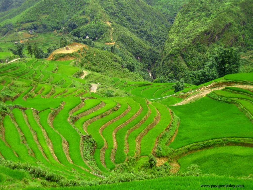 Sa pa terrazas y arrozales viaje a vietnam