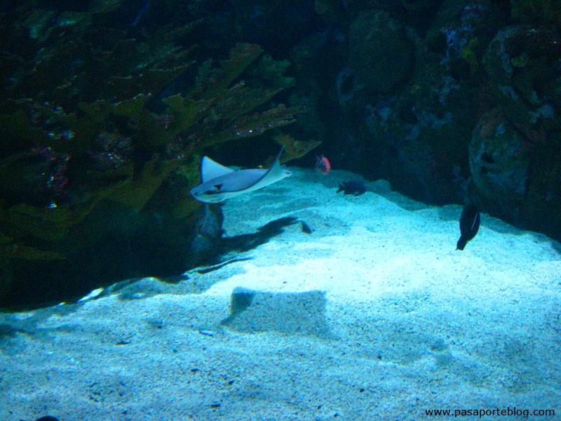 Manta Parque Oceanografico Valencia