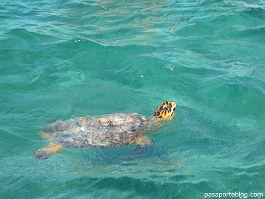 Tortuga Sian Kaan Riviera Maya, Cancun, Mejico