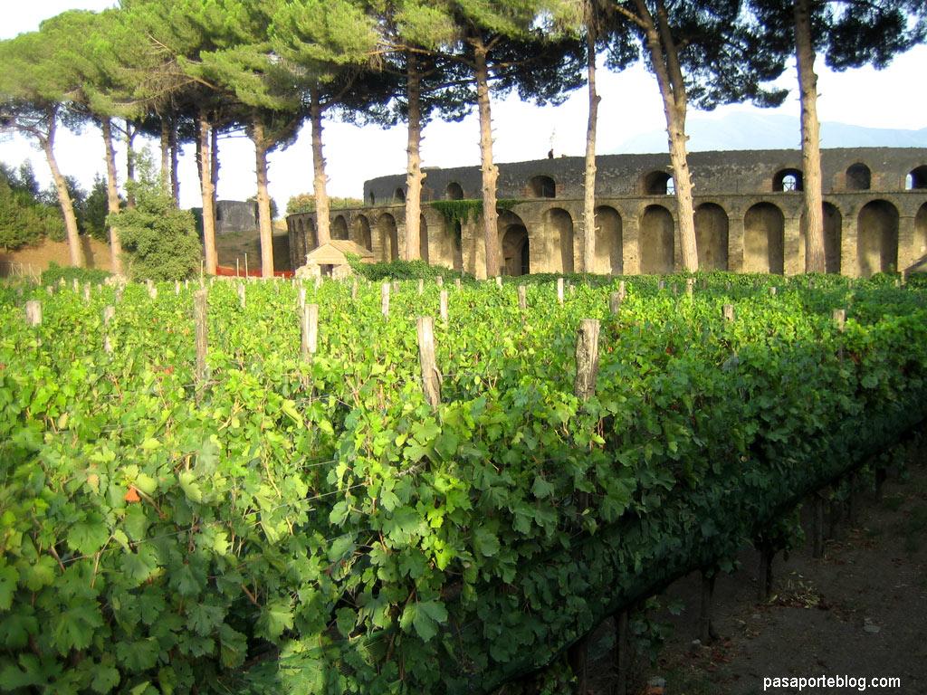 viñedos y anfiteatro romano en Pompeya