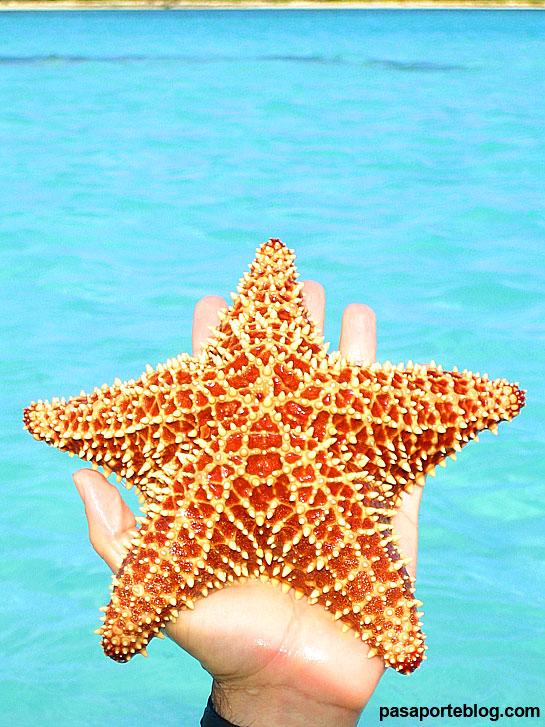 Estrella de Mar, playas de Isla Saona