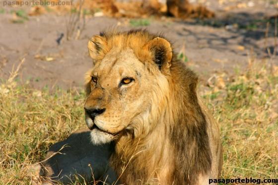 leon botswana
