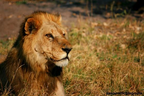 Leon Moremi Game Reserve