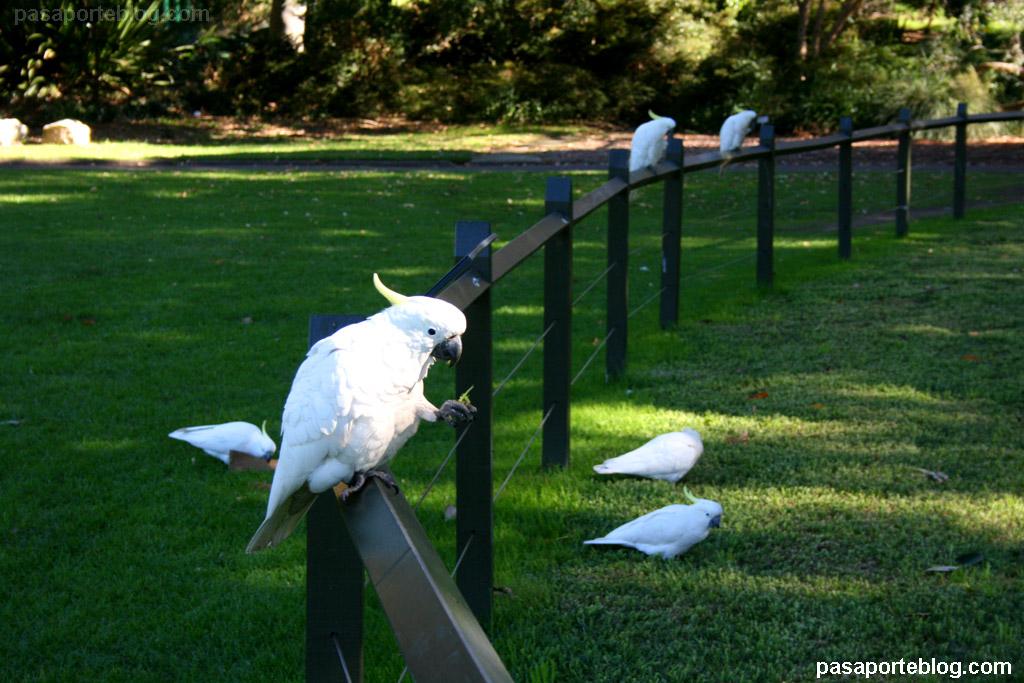 Jard n bot nico de sidney animales salvajes sueltos en for Como ir al jardin botanico