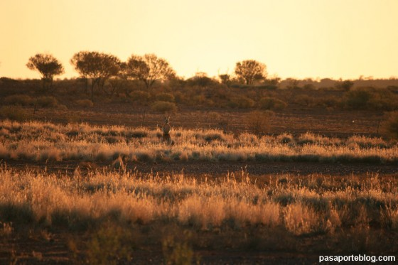 canguro territorios del norte