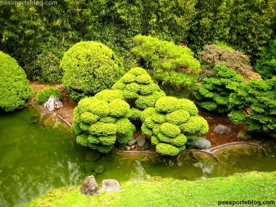 Jard n japon s de san francisco o japanese tea garden for Plantas jardin japones