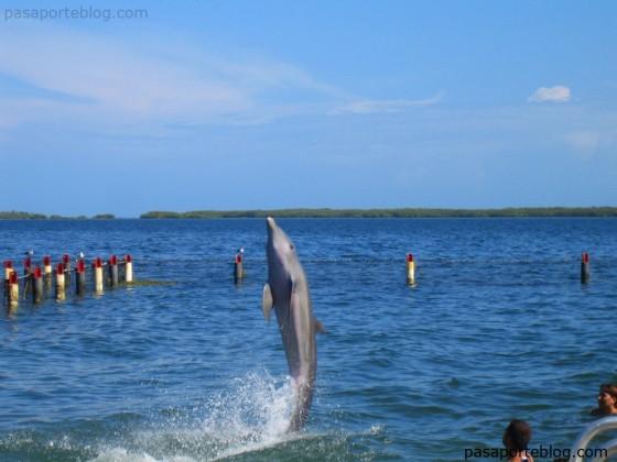 banarse con delfines cuba