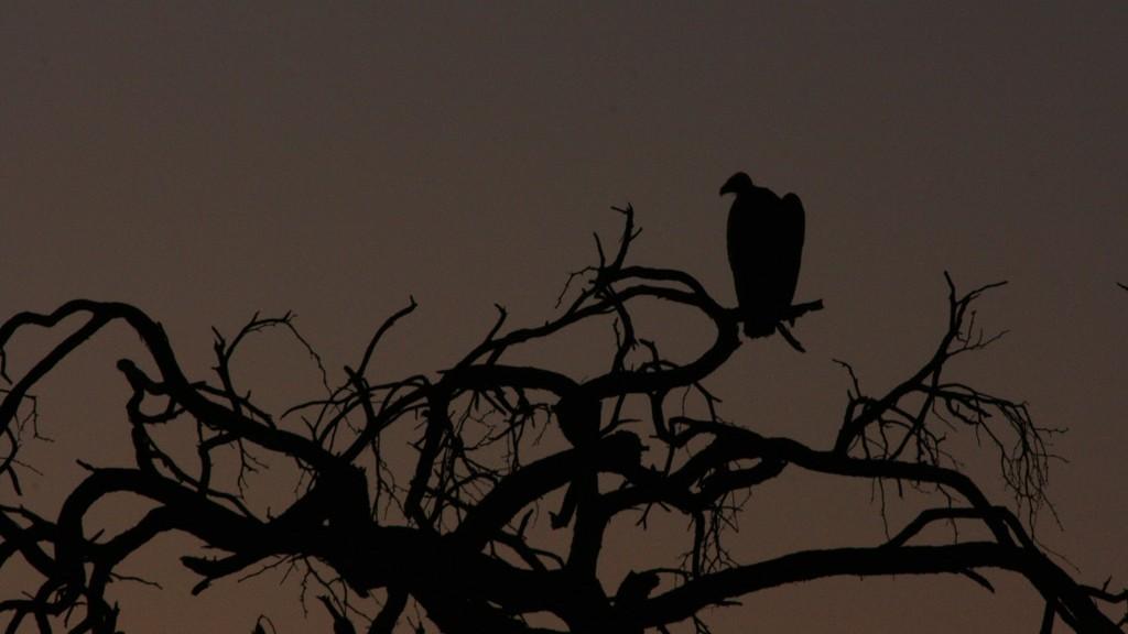 visita en el parque nacional Makgadikgadi de ma