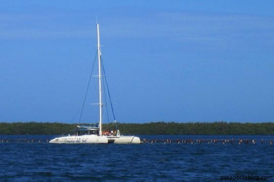 catamaran para banyarse con delfines