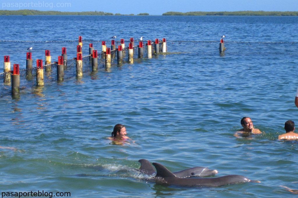 Baño con delfines en Cuba