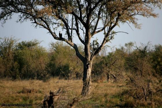 Aguila en safari fotografico animales salvajes