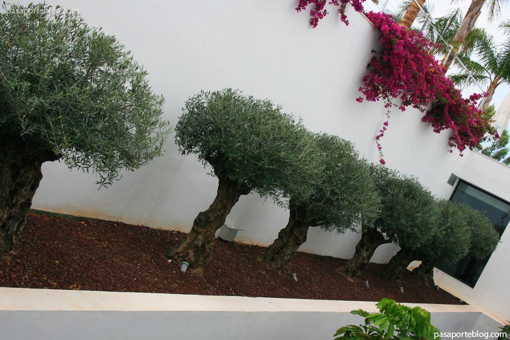arquitecto CARLOS GILARDI Sha wellness clinic