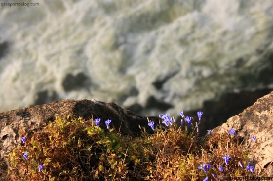 al-borde-del-precipicio-en-cataratas-victoria