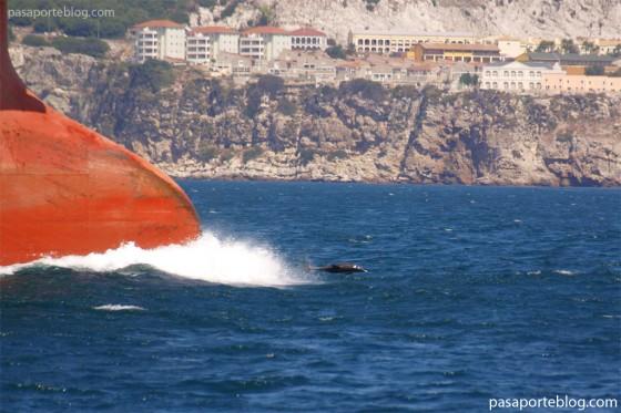 Un delfin y un petrolero