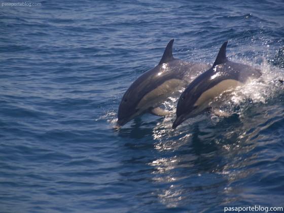 delfines en el mar mediterraneo, estrecho de gibraltar