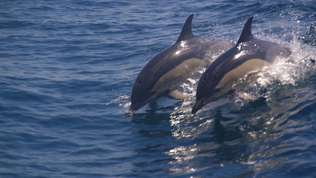 Delfines en gibraltar mar mediterraneo