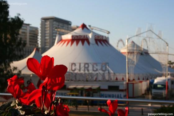 la flor y el circo