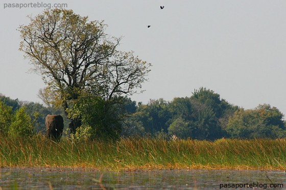 kavango viaje a botswana africa sur