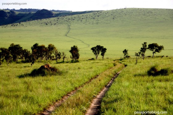Sabana africana en la Republica del Congo