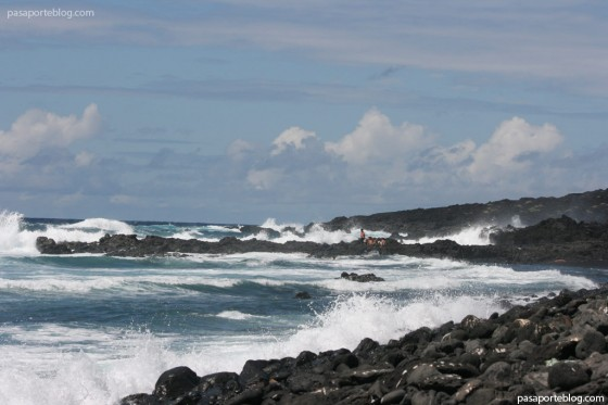 lazarote oceano atlantico el golfo