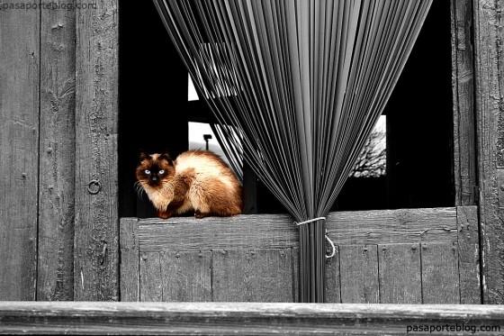 gato cerca del castillo de Morella, morella