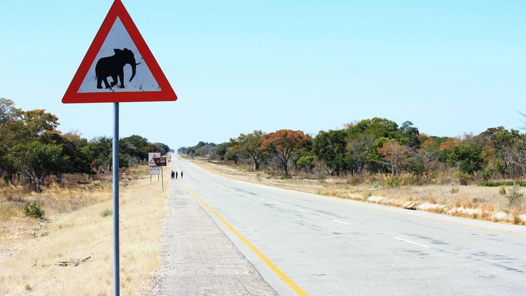 señales de trafico peligro elefantes