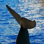 cola de delfin valencia