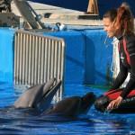 entrenando delfines en el oceanografico de valencia