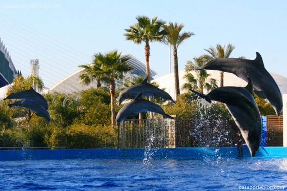Delfines en el delfinario del oceanográfico de Valencia