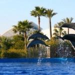 Delfines en el Oceanografico de Valencia