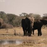 Elefantes en Botswana, Parque nacional de Makgadikgadi y Nxai