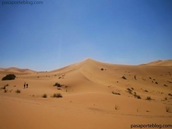 desierto del draa, camellos y dunas del sahara