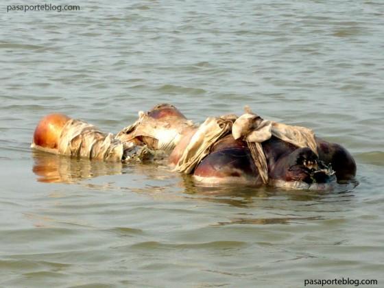 muertos-flotando-en-el-ganges