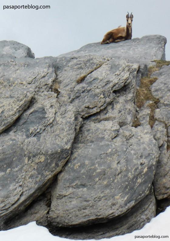 sarrios valle de ordesa pirineos