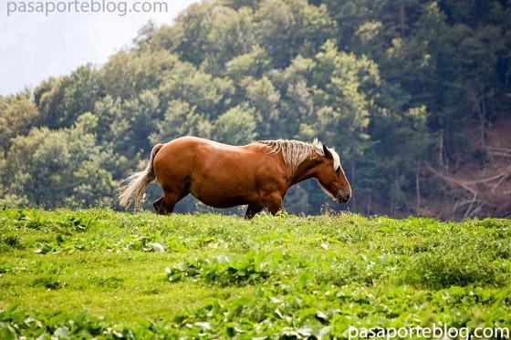 caballos Vall d Aran turismo en pirineos
