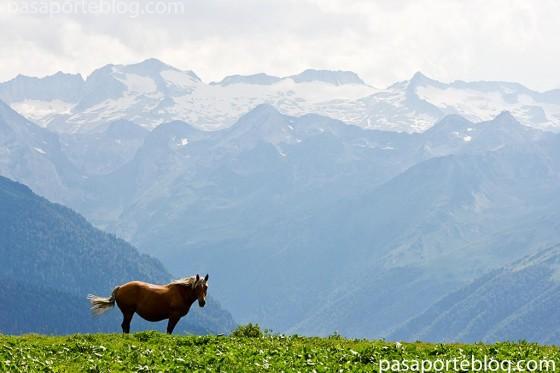 vall de aran caballo y el mazizo del aneto