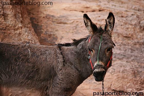 Ascender en Burro al monumento del monasterio en Petra