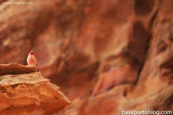 Pajaro en la roca de Petra