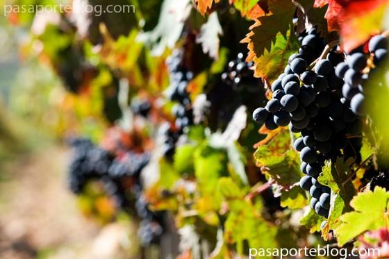 La vendimia en Rioja Alavesa, turismo etnologico