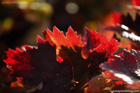 otoño en los viñedos de Rioja Alavesa