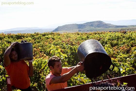 jornaleros en la vendimia, Denominacion de Origen Rioja
