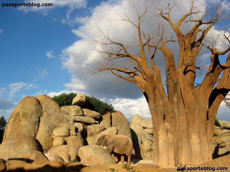 Elefante en el bosque de Baobabs