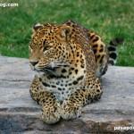 Zoo de Valencia, un lugar para visitar